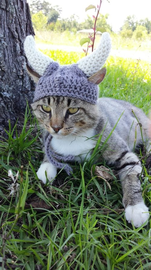 104 Kittens Christmas Outfits - 20 Christmas Costumes For Cats
