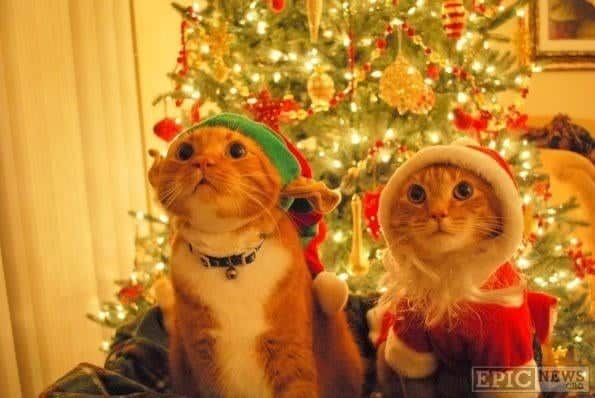 1110 Kittens Christmas Outfits - 20 Christmas Costumes For Cats