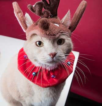 119 Kittens Christmas Outfits - 20 Christmas Costumes For Cats