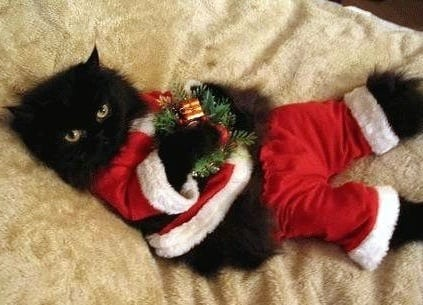 134 Kittens Christmas Outfits - 20 Christmas Costumes For Cats