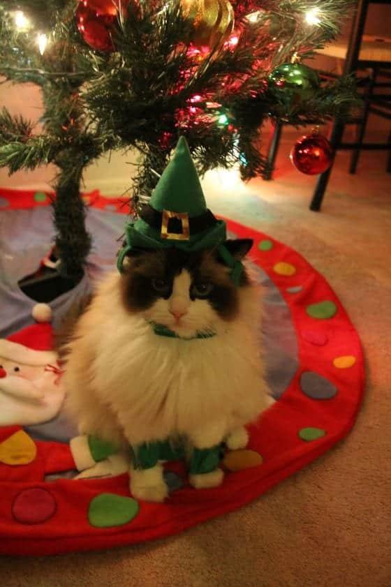 144 Kittens Christmas Outfits - 20 Christmas Costumes For Cats