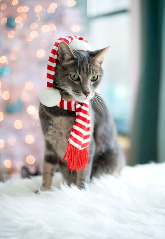 ... getting your cat these hats and mufflers in colours that match your own christmas  outfit. Yes! That way you'll both have matching costumes and won't it ... - Kittens Christmas Outfits - 20 Christmas Costumes For Cats