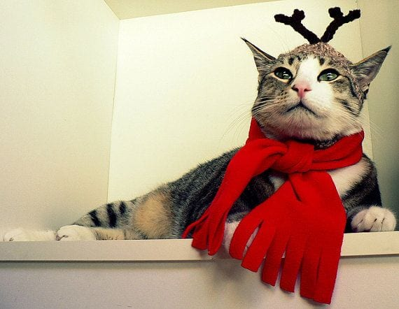 164 Kittens Christmas Outfits - 20 Christmas Costumes For Cats