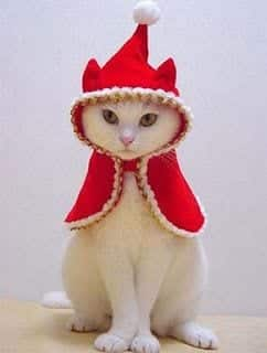 174 Kittens Christmas Outfits - 20 Christmas Costumes For Cats