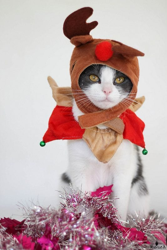 184 Kittens Christmas Outfits - 20 Christmas Costumes For Cats