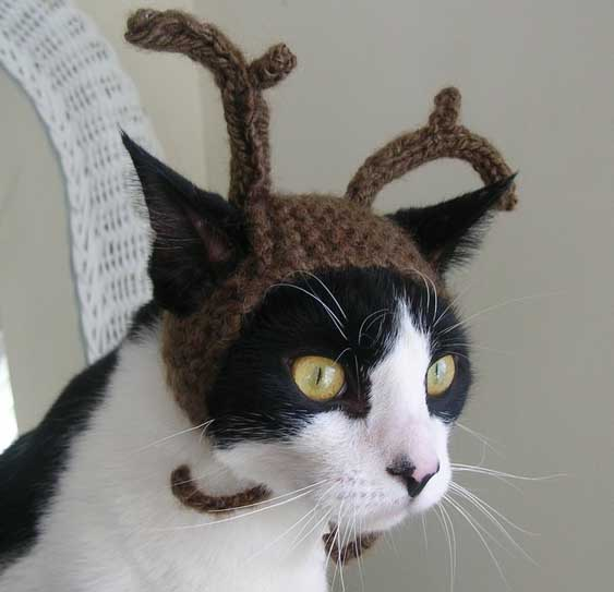 25 Kittens Christmas Outfits - 20 Christmas Costumes For Cats