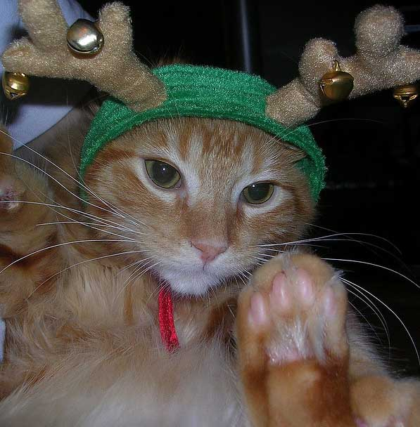 36 Kittens Christmas Outfits - 20 Christmas Costumes For Cats