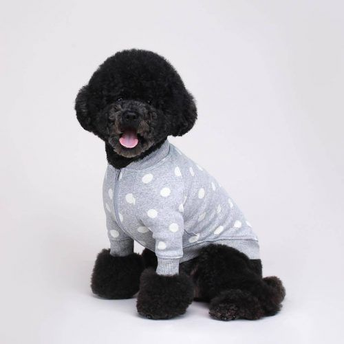 Dog-Outfits-on-a-Budget-500x500 Funny Outfits for Dogs – 20 Most Funny Clothes for Dogs