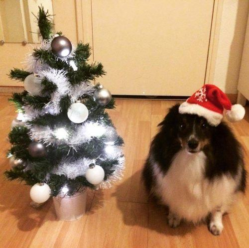 Dog-Outfitsfor-Christmas-500x498 Funny Outfits for Dogs – 20 Most Funny Clothes for Dogs