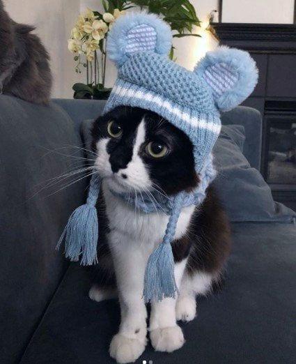 Funny Cat Costumes (12)