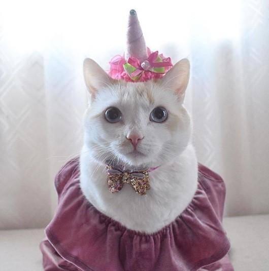 Funny Cat Costumes (10)