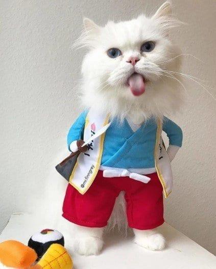 Funny Cat Costumes (9)