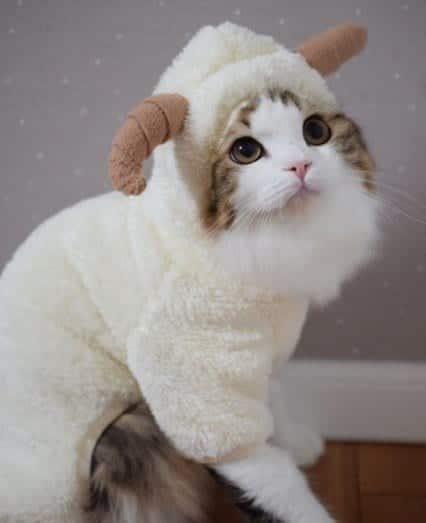 Funny Cat Costumes (8)