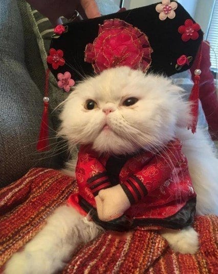 Funny Cat Costumes (7)