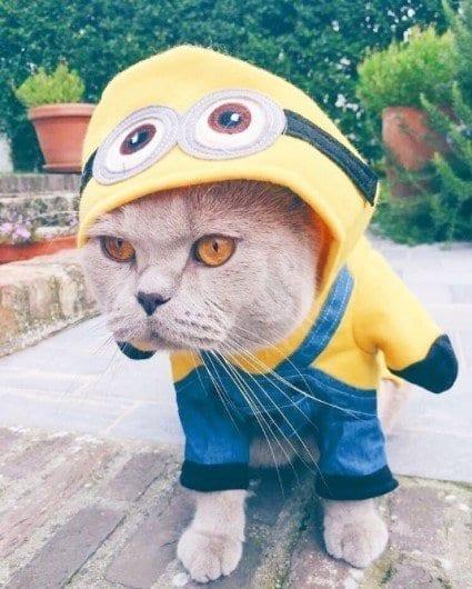 Funny Cat Costumes (6)