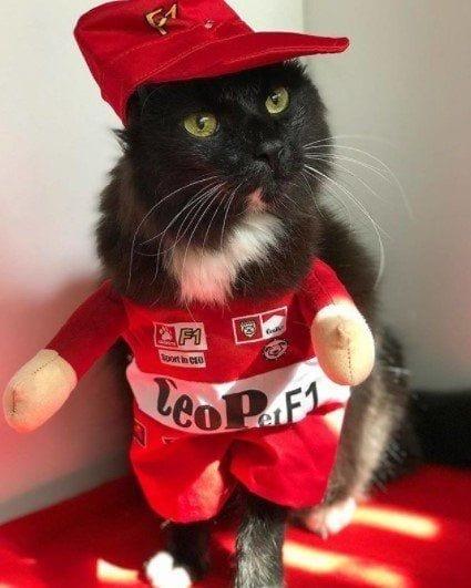 Funny Cat Costumes (5)