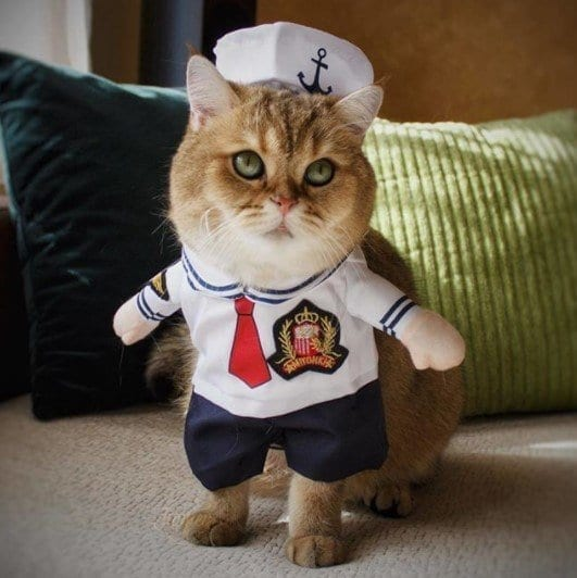 Funny Cat Costumes (4)