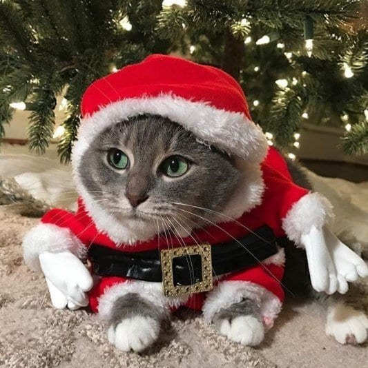 Funny Cat Costumes (3)