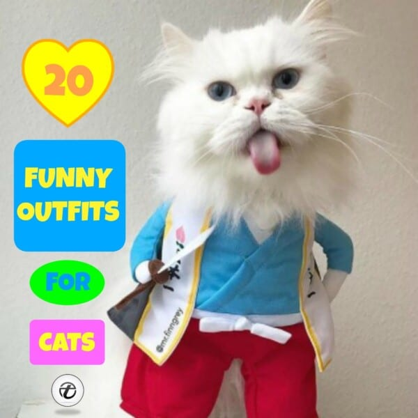 Funny-Cat-Outfits21-600x600 Funny Outfits For Cats – 20 Most Funny Clothes For Cats