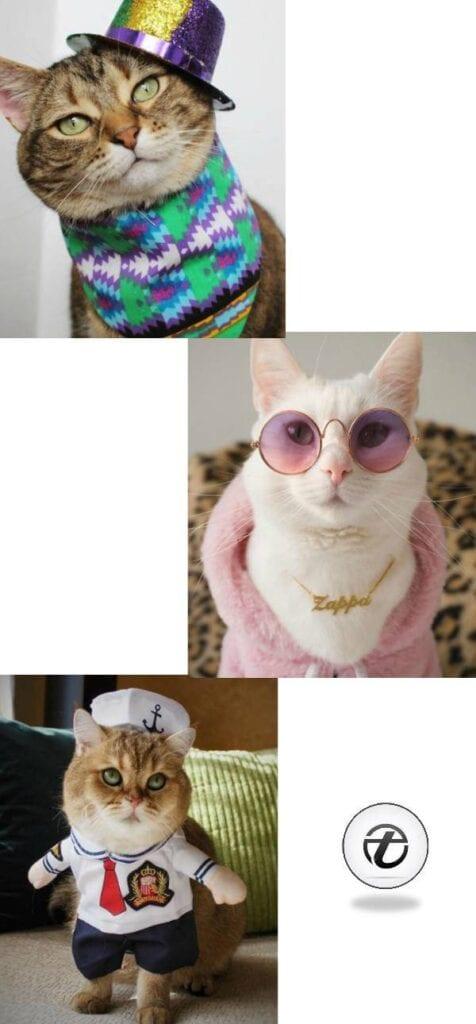 Funny Cat Costumes (1)