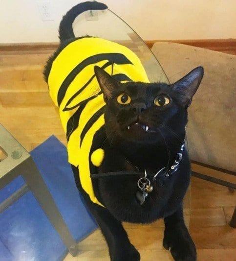 Funny Cat Costumes (19)