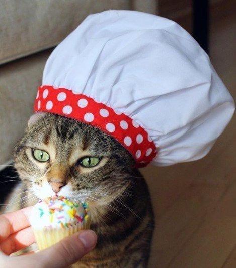 Funny Cat Costumes (16)
