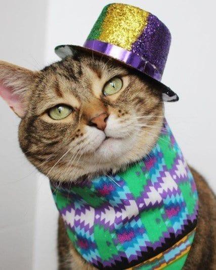 Funny Cat Costumes (15)