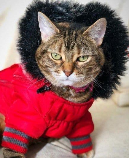 Funny Cat Costumes (14)