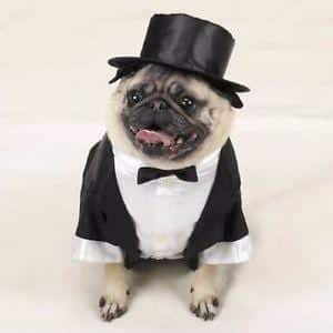 SUIT-UP Funny Outfits for Dogs – 20 Most Funny Clothes for Dogs