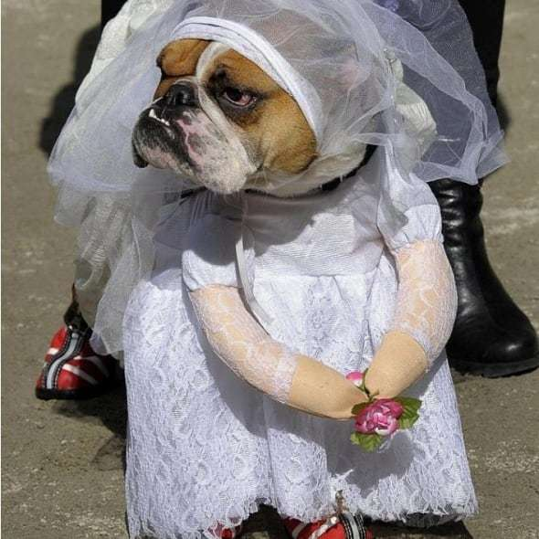 funny outfits for dogs � 20 most funny clothes for dogs