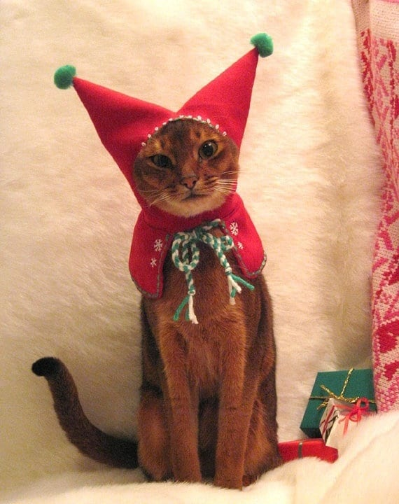 Image result for cats santa costumes pictures