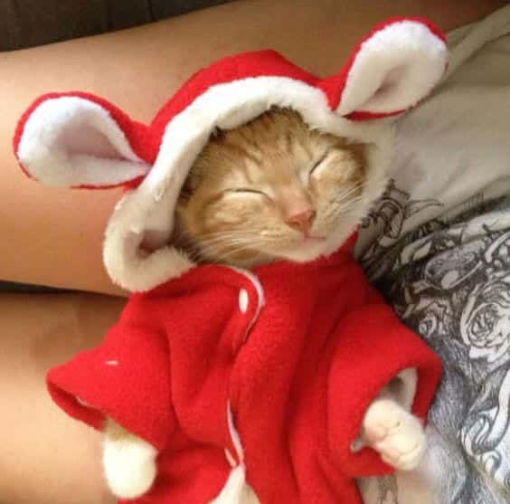 #15 – Christmas Robe For Kittens - Kittens Christmas Outfits - 20 Christmas Costumes For Cats