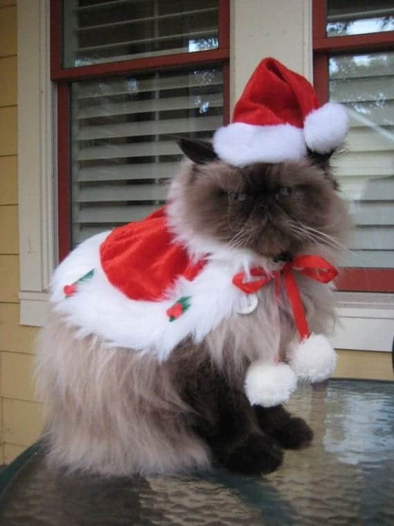 Tie them around your cat and add a Santa hat for a perfect Christmas look. - Kittens Christmas Outfits - 20 Christmas Costumes For Cats