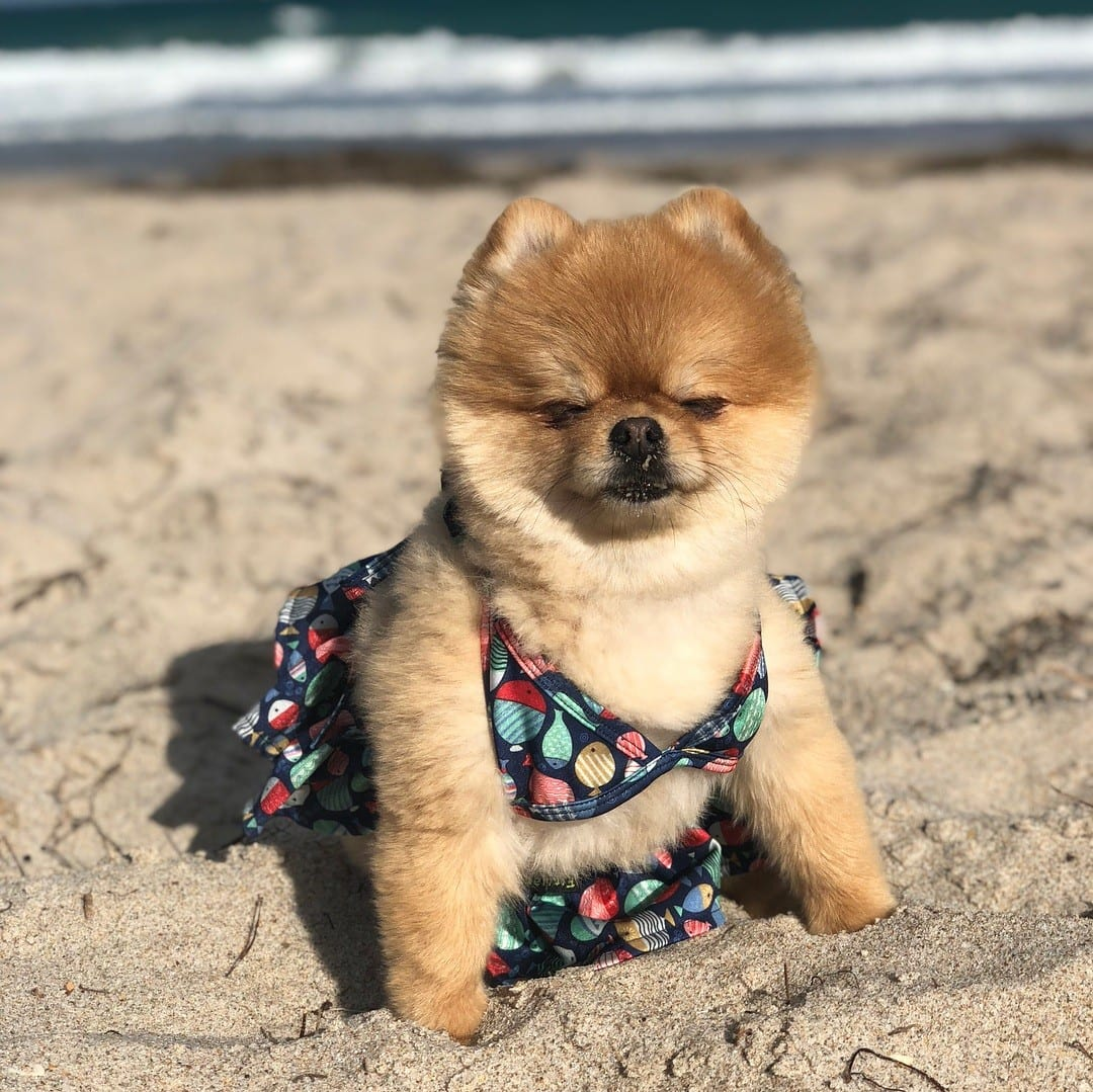 Funny Outfits for Dogs - 20 Most Funny Clothes for Dogs