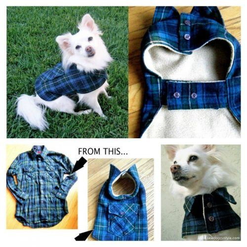 Funny Outfit Ideas for Dogs (2)