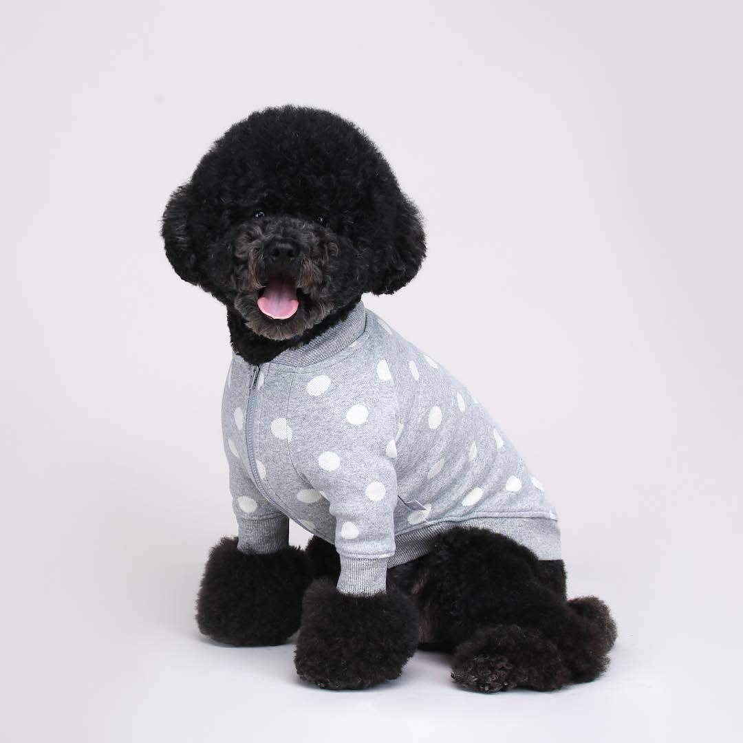 Funny Outfits For Dogs 20 Most Funny Clothes For Dogs