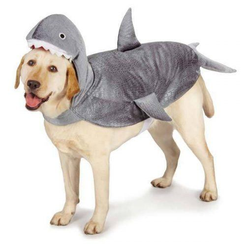 Funny Outfit Ideas for Dogs (17)