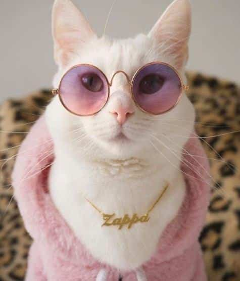 funny outfits for cats 20 most funny clothes for cats