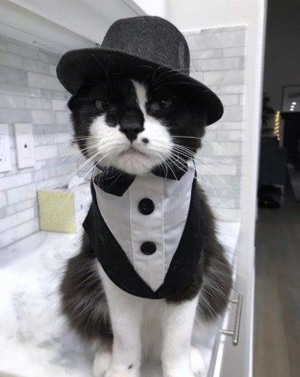 Funny Cat Costumes (13)