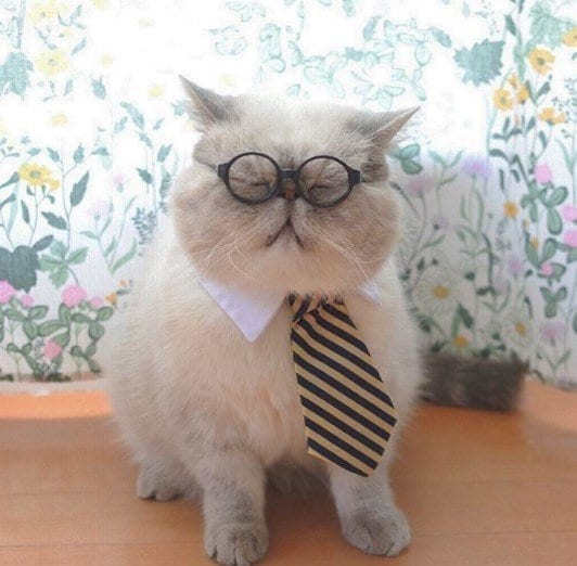 Funny Cat Costumes (11)