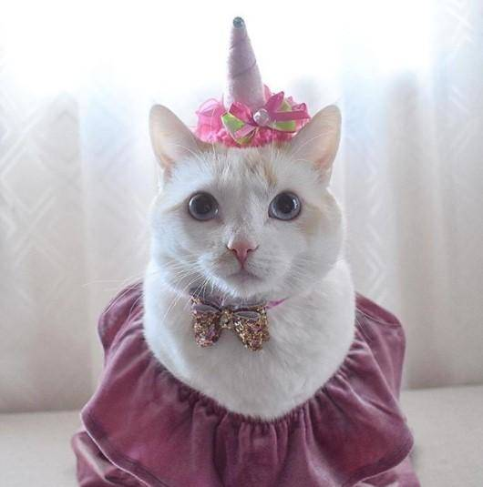 Funny Cat Costumes (10) & Funny Outfits For Cats u2013 20 Most Funny Clothes For Cats