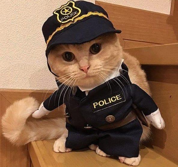 Funny Cat Costumes (21)