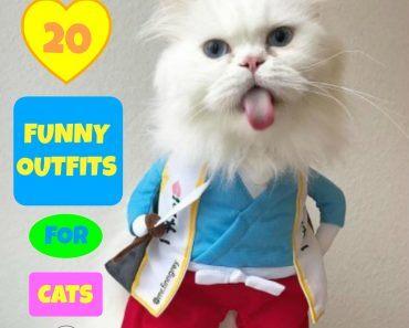 Funny Cat Costumes (2)