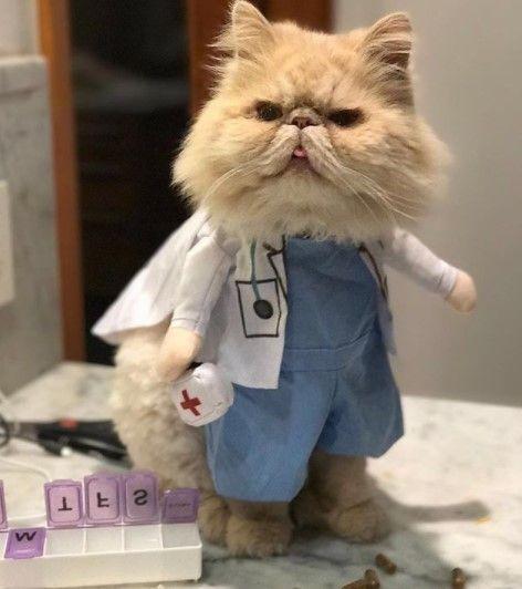 Funny Cat Costumes (20)