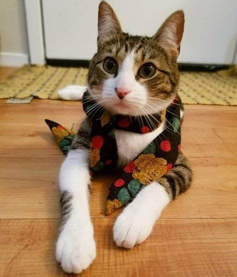 Funny Cat Costumes (18)