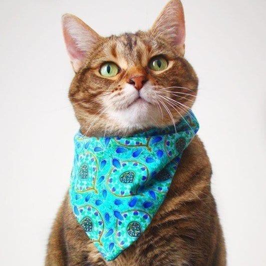 Funny Cat Costumes (17)