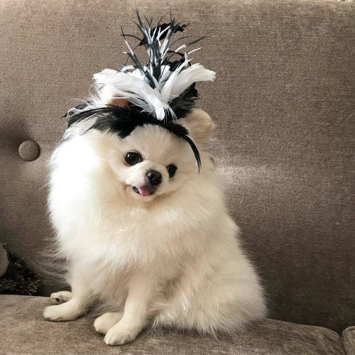 Funny Outfit Ideas for Dogs (6)