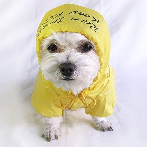 Funny Outfit Ideas for Dogs (14)