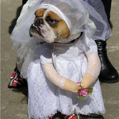Funny Outfit Ideas for Dogs (13)