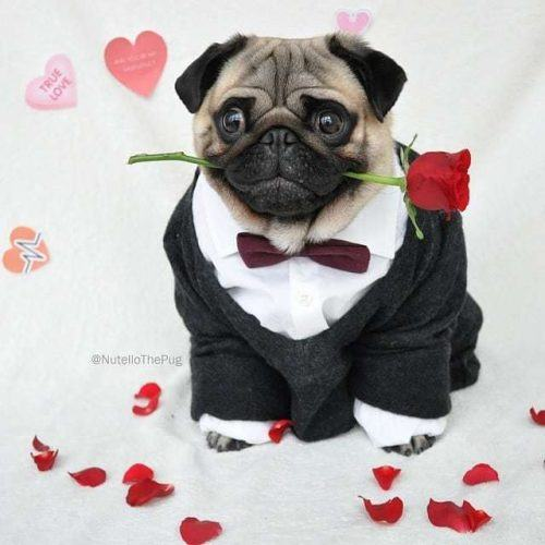 Funny Outfit Ideas for Dogs (9)